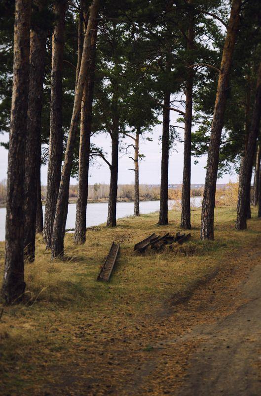 лес, деревья, бор, белка Шишкин лесphoto preview