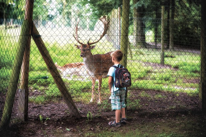 reserve,deer,cage,child ,looks,familiarity familiarity..photo preview
