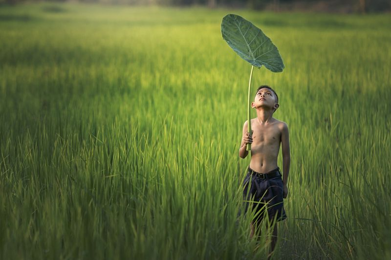 child; outdoor; thailand; burma; agriculture; green; white; travel; boy; field; grass; farm; people; poor; traditional; asia; countryside; portrait; smile; thai; poverty; lifestyle; girl; person; beauty; rural; kid; rice; labor; beautiful; background; nat Look !!photo preview