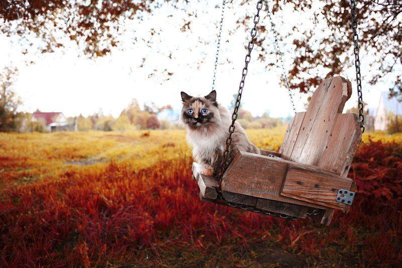 красная осеньphoto preview