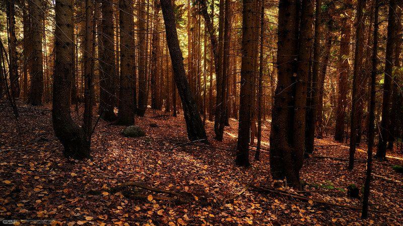 Лесная осеньphoto preview