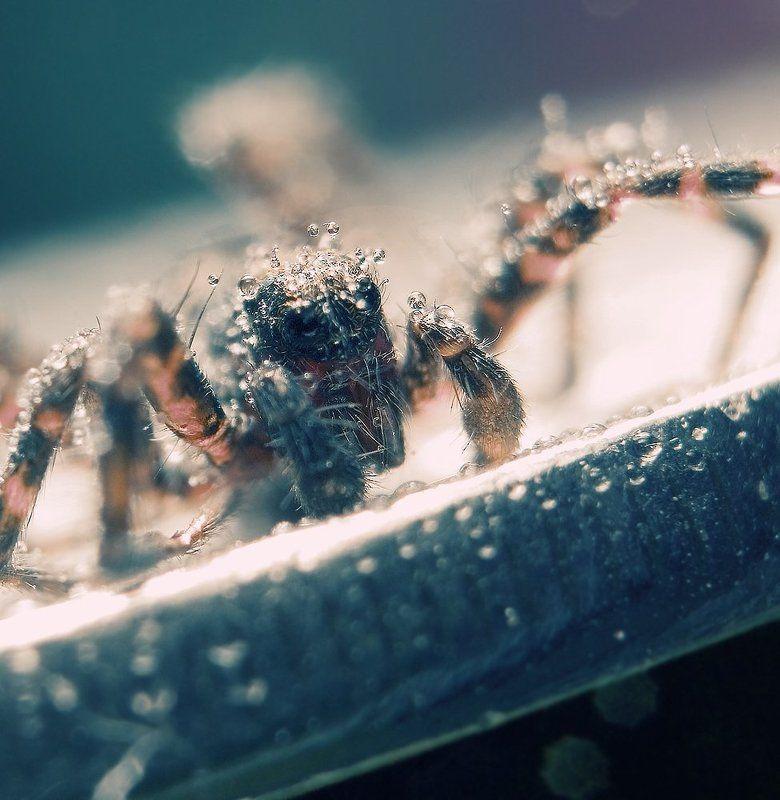 макро,мокро,капли,паук,природа,монета ///00\\\\\\photo preview