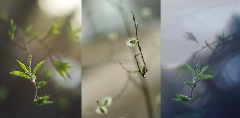 весна, , лес, , bokeh Весенние этюдыphoto preview