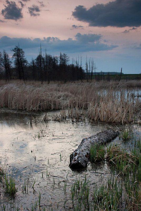 faniz, крокодил, вечер песенка про крокодилаphoto preview
