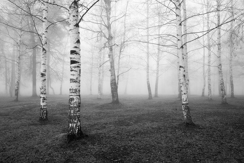 утро, туман, природа туманнаяphoto preview