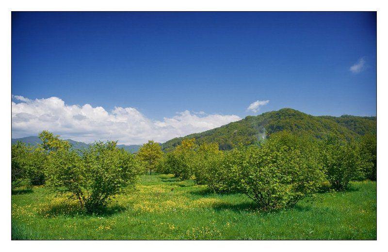 весна, май, горы, сочи 1 Mayphoto preview