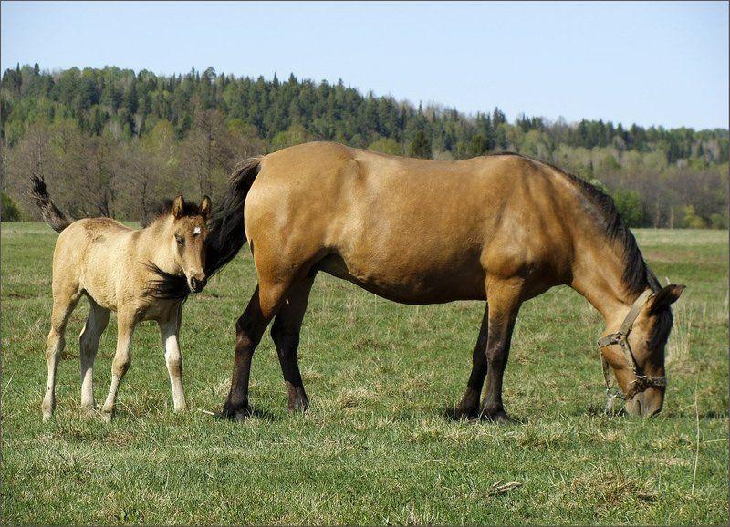удмуртия,лошади,весна ***photo preview