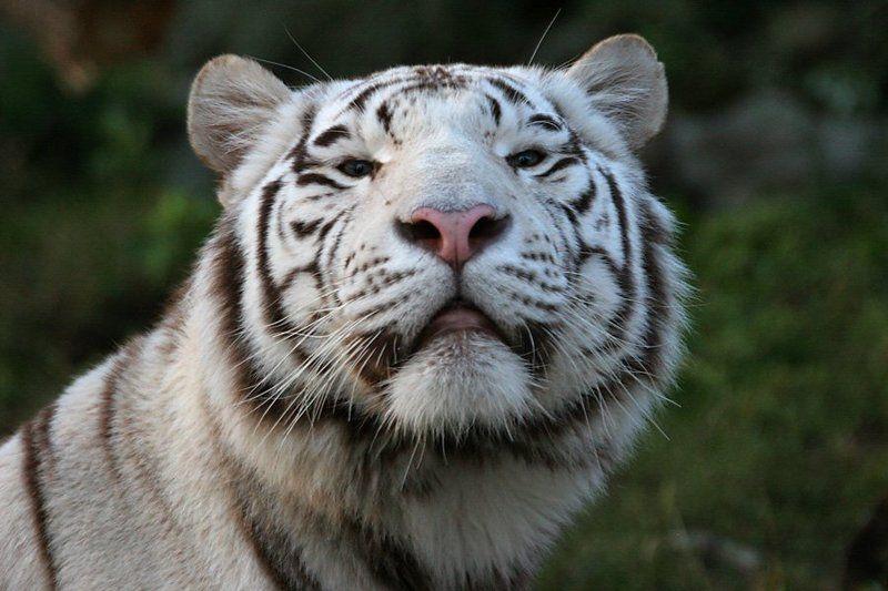 Купание белого котаphoto preview
