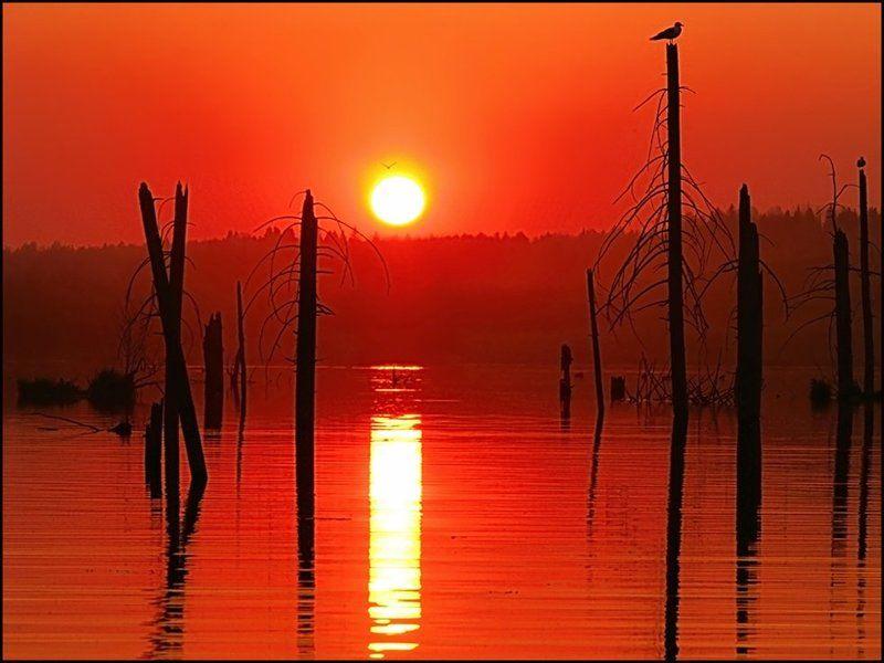 закат,небо,пейзаж,пруд,удмуртия Red Planetphoto preview