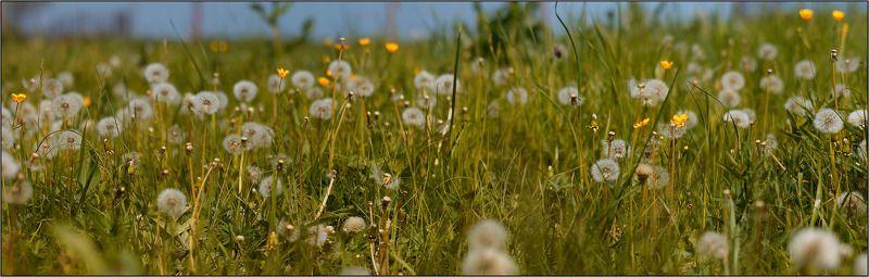 дон, луг, трава, весна Донской лугphoto preview