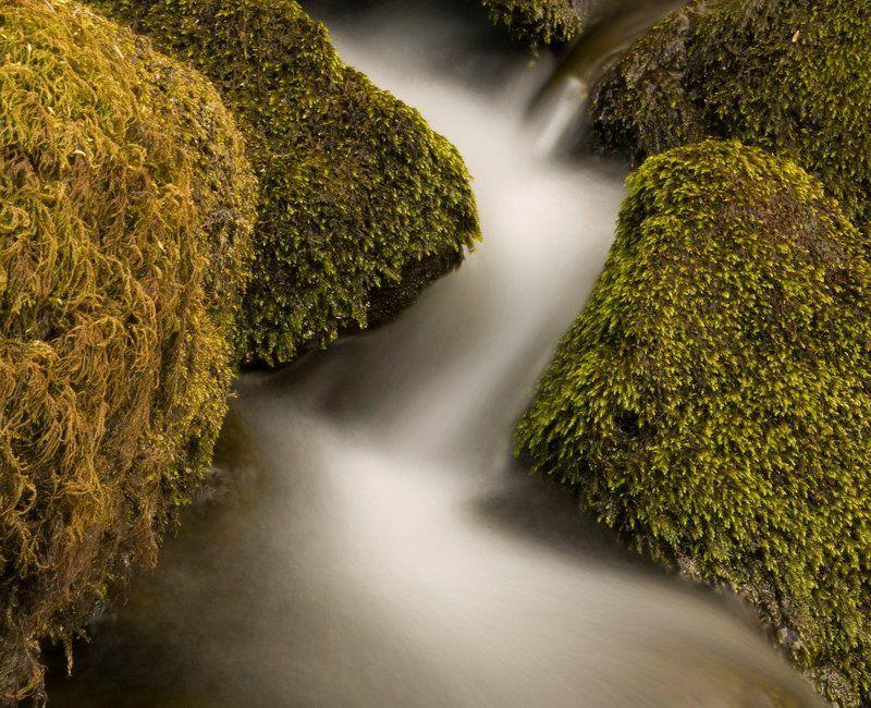 молочные рекиphoto preview