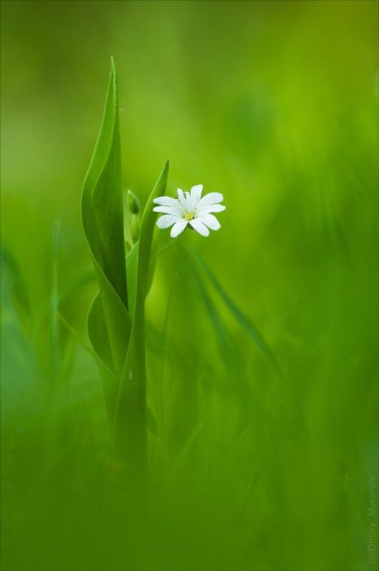 весна, , май, , лес, , цветок, , грация, , боке, , bokeh Лесная грацияphoto preview