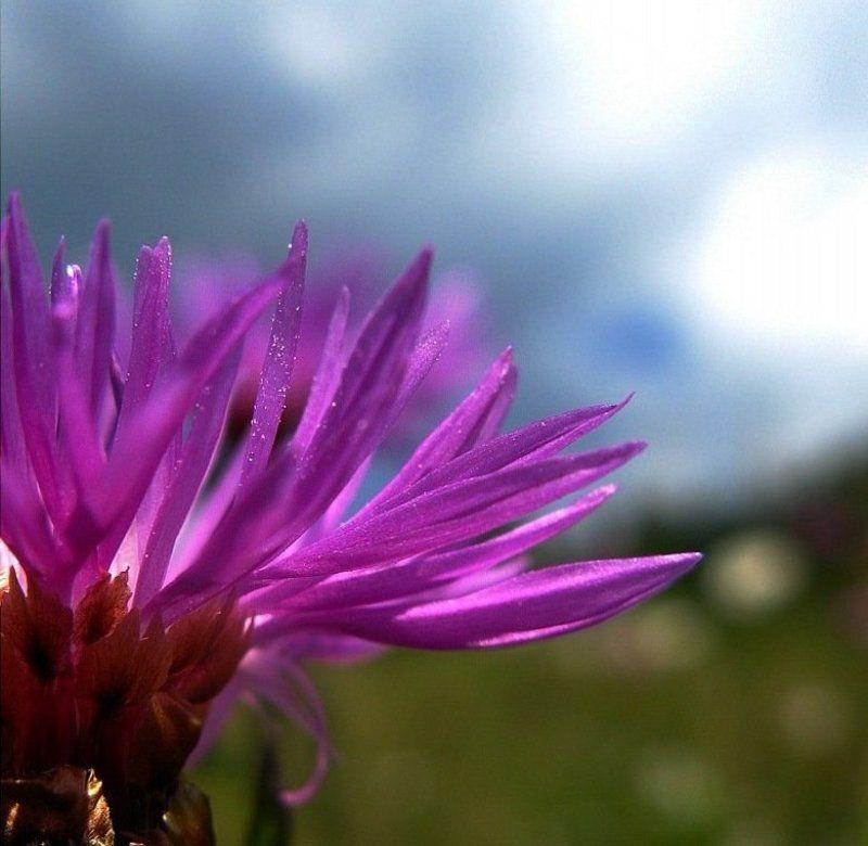 .....я подарю тебе нежность цветка......photo preview