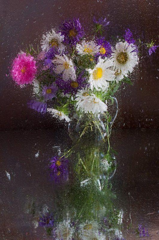 цветы, , хризантемы, , букет, , дождь Акварель дождяphoto preview
