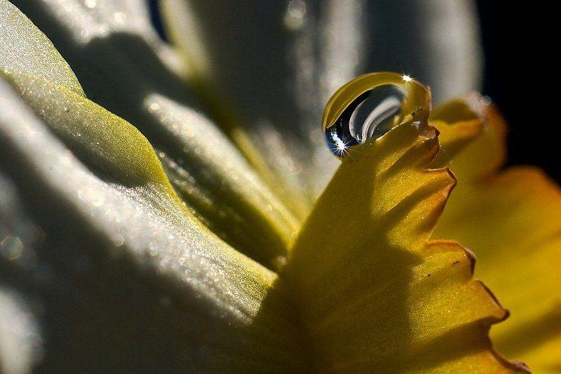 растительность,капельки, макро. В лучах солнца.photo preview