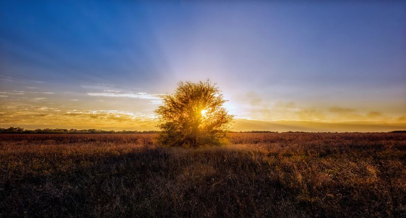 sky ,landscape ,sunset, nature, blue, sun, light, tree, green ,rays The tree of life ..photo preview