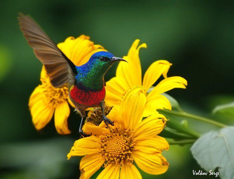 Африка, Дикая природа, Дикие животные, Птицы Привет, фотограф!photo preview
