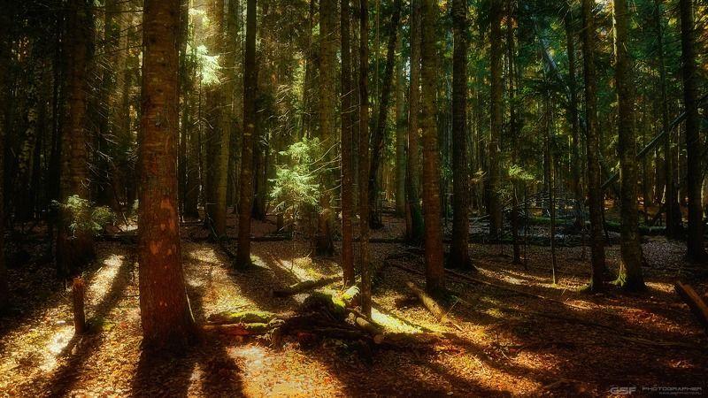 Про свет в лесуphoto preview
