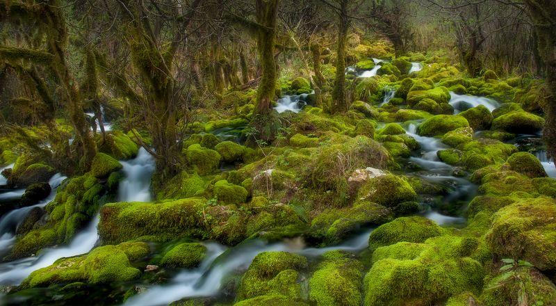#nature #landscaspe #nikon #national parck #spring #instagram Mistick of spring...photo preview