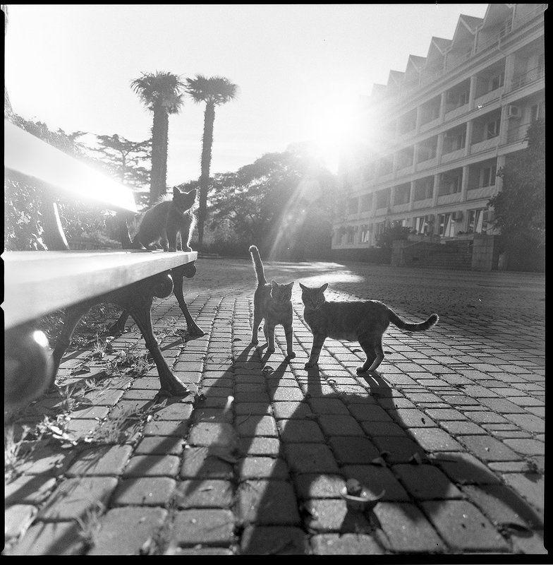 Прогулка с Кошкамиphoto preview