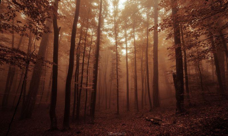 осень, осенний лес,туман Буковая осеньphoto preview