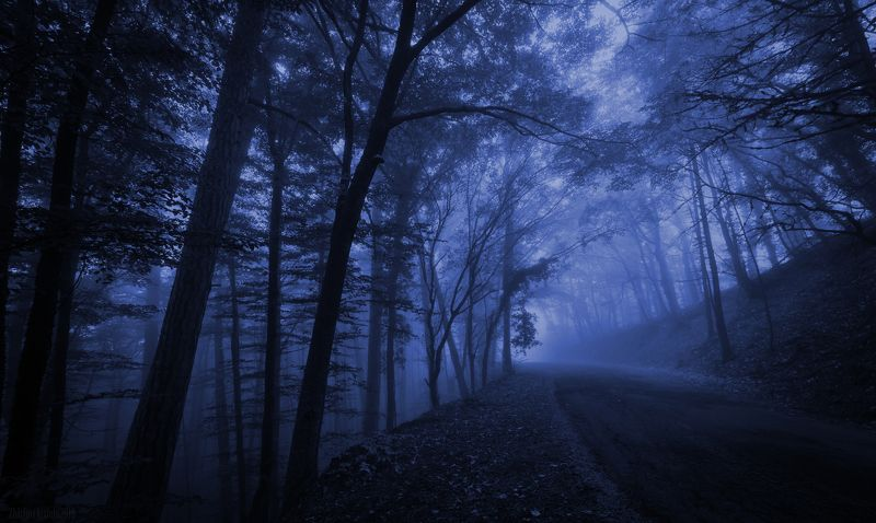 осень, осенний лес,туман,дорога в тумане Голубая мглаphoto preview