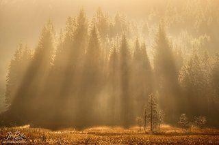Bavarian rays