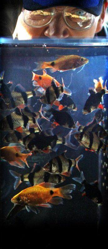 рыбки, аквариум, мужчина АКВАРИУМphoto preview