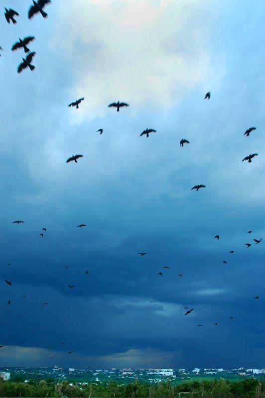 тучи, птицы, курск,затишье перед грозой, 7.06.07 Перед грозойphoto preview