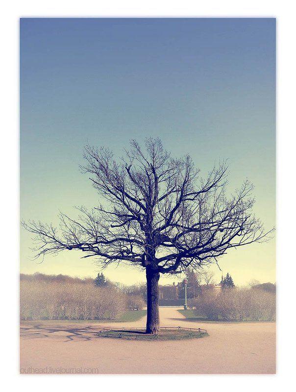 питер, марсово поле, дерево when you alivephoto preview