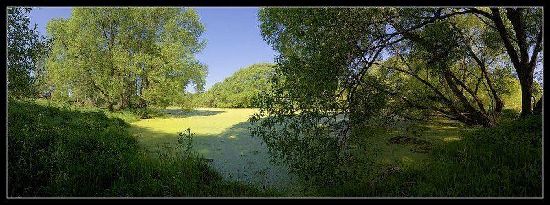 подмосковье, пруд, старый, ива, панорама Старый прудphoto preview