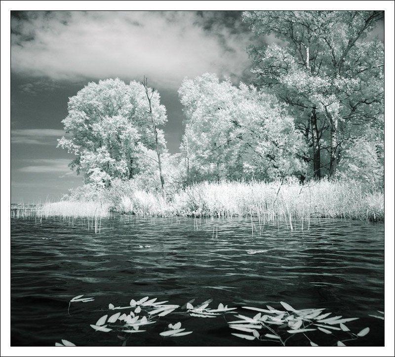 ик, инфракрасное, infrared, лес, озеро Сенеж. ИКphoto preview