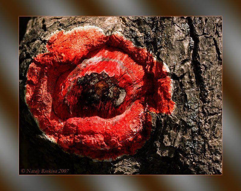 фотоарт,кора,мак,коллаж Рисуем мелом на кореphoto preview