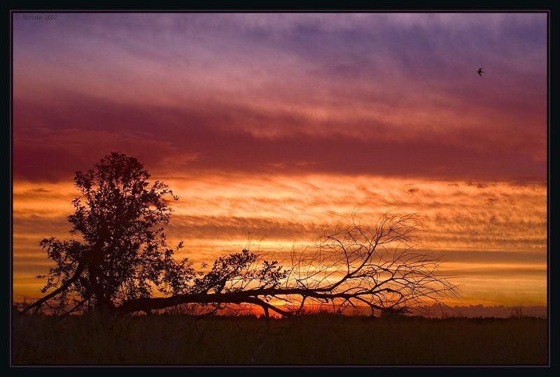 красивый, закат, необычное дерево, птица На исходе дня...photo preview