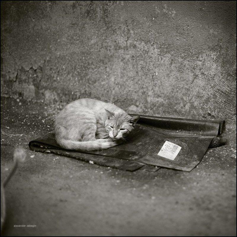 кошка, кот, cat, zabegin ***photo preview