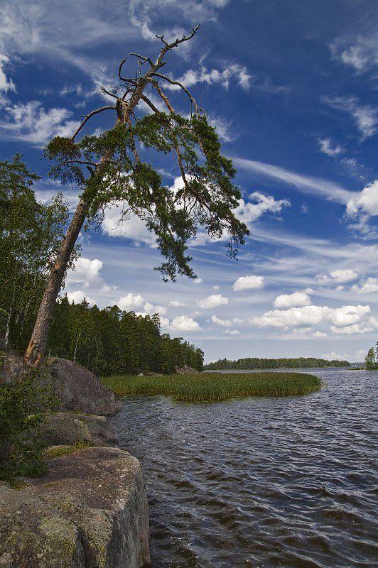 монрепо, берег, камень, дерево Сосна и небоphoto preview