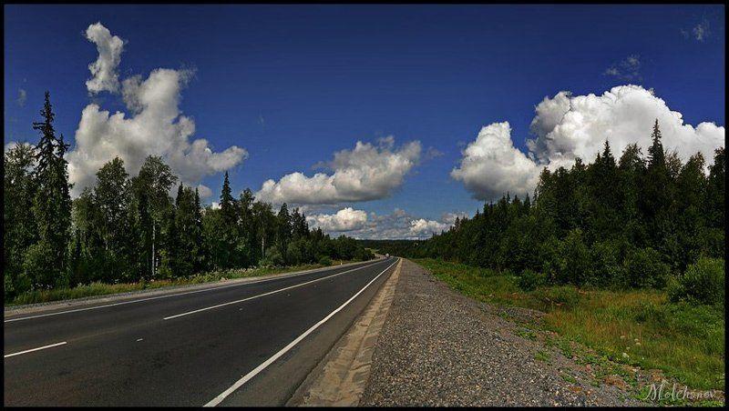 дорога, панорама, лес, сосны, облака, небо, трава, горизонт По дороге с облакамиphoto preview