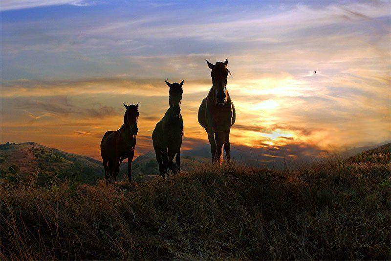 кони,закат ...Усталость...photo preview