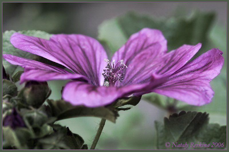 макро,цветы,лето Ожидание...photo preview