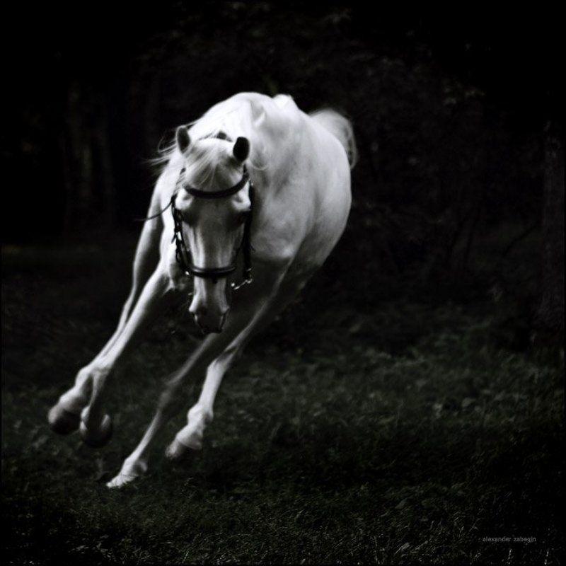 лошадь, лошади, конь, horses, horse, equi, zabegin about_dreamlandphoto preview