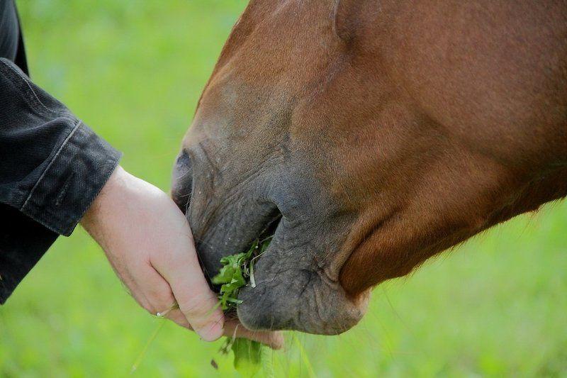 животные Доверие.photo preview