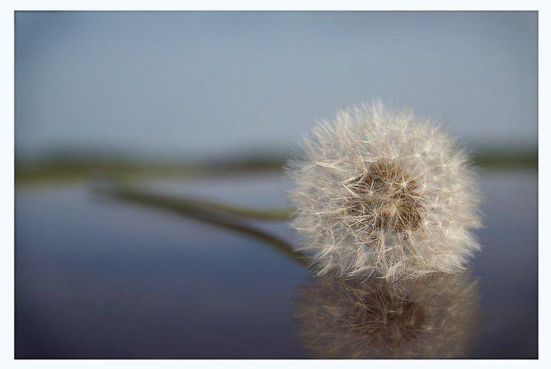 одуванчик,лето, easy lifephoto preview
