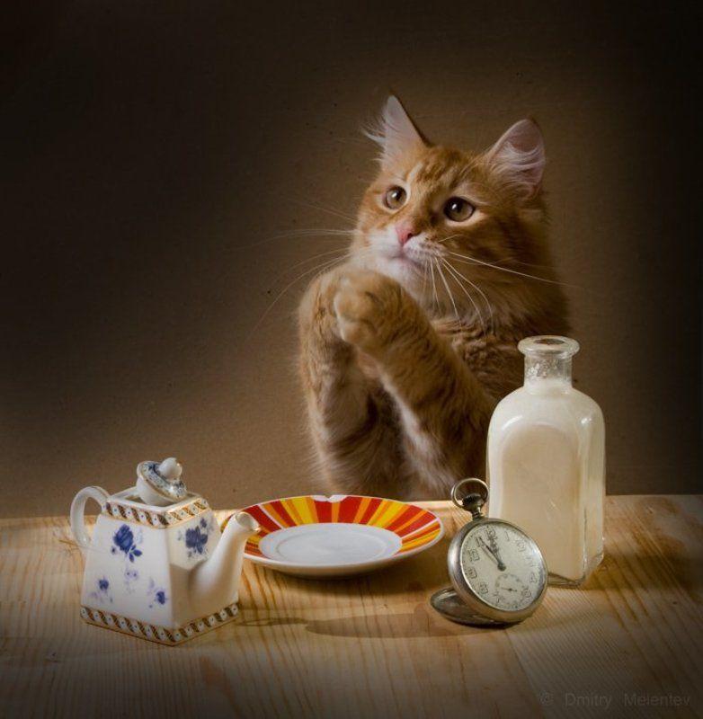 кот, молоко, , трапеза Вот бы рыбкиphoto preview