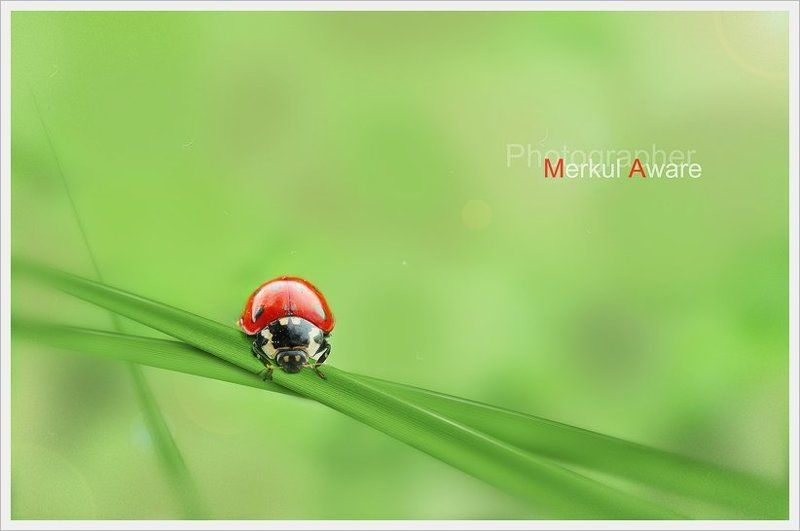 one day, day, однажды, merkul, merkul aware, макро, трава, боке One dayphoto preview