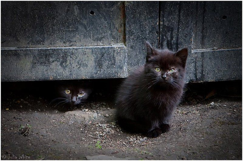 котята, кот, бездомные, cat уличные пацаныphoto preview