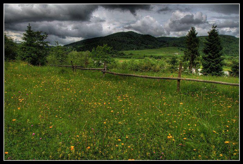 долина, изгородь, цветы, лес ***photo preview