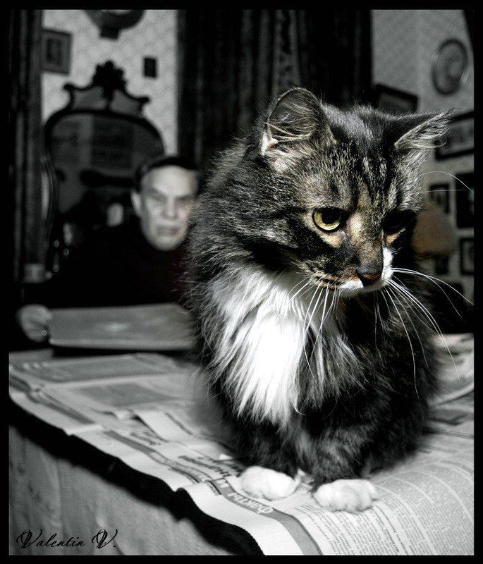 про кота и хозяина...photo preview