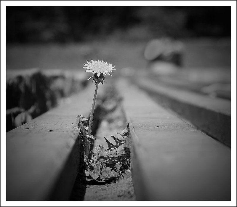 одуванчик Dandelion Depressionphoto preview