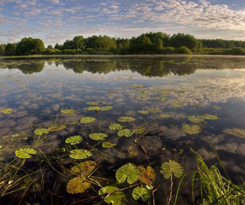 утро, кувшинки, озеро, лето, июнь утро и кувшинкиphoto preview