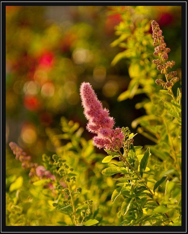 закат,природа,цветы закатphoto preview